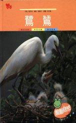 親親自然月刊-鷺鷥