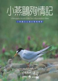 小燕鷗殉情記:小燕鷗在台灣的繁殖情事