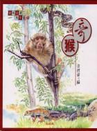 奇猴 封面