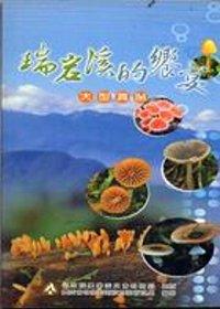 瑞岩溪的饗宴:大型真菌