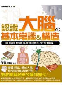 認識大腦の基本常識&構造:詳細瞭解與腦部相關的所有知識!