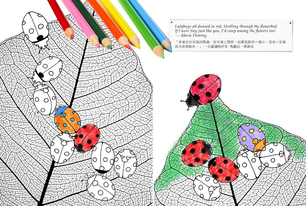 ◤博客來BOOKS◢ 暢銷書榜《推薦》彼得潘的奇幻夢境:禪繞每個人心中的秘密花園!(全書使用進口專業繪圖紙/隨書附贈16張奇幻夢境冒險明信片)