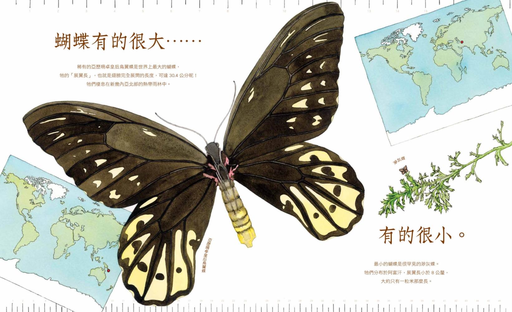 ◤博客來BOOKS◢ 暢銷書榜《推薦》有耐心的蝴蝶