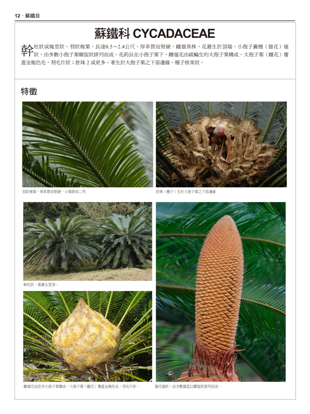 //im1.book.com.tw/image/getImage?i=http://www.books.com.tw/img/001/074/50/0010745089_b_06.jpg&v=5957227e&w=655&h=609