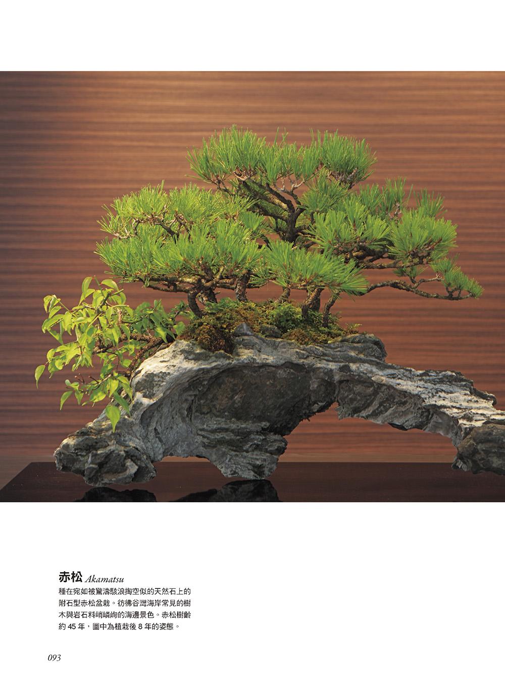 ◤博客來BOOKS◢ 暢銷書榜《推薦》樹形盆栽入門書: 一次學會10種新手也能輕鬆掌握的基礎技法