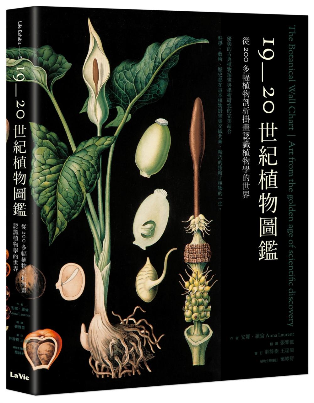 19~20世紀植物圖鑑:從20...