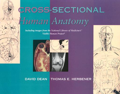 Cross Sectional Human Anatomy