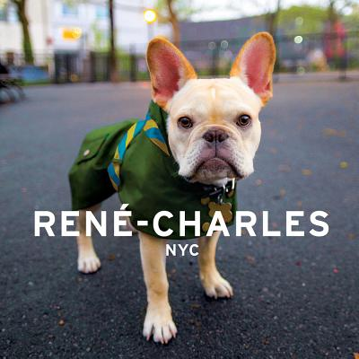 Rene-Charles NYC: Little Bulldog in the Big City