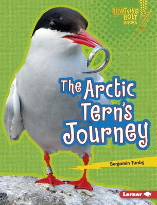The Arctic Tern's Journey