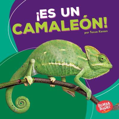¡Es un camaleón! / It's a Chameleon!