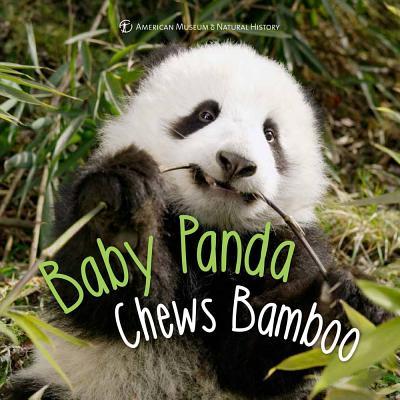 Baby Panda Chews Bamboo