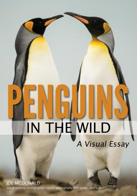 Penguins in the Wild: A Visual Essay