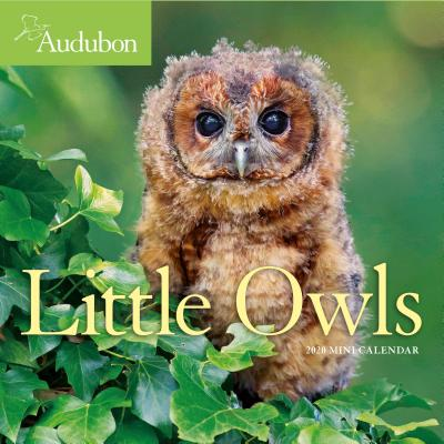 Audubon Little Owls 2020 Calendar