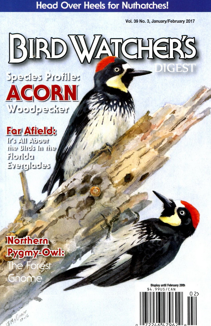 BIRD WATCHER'S DIGEST Vol.39 No.3 1-2月號/2017