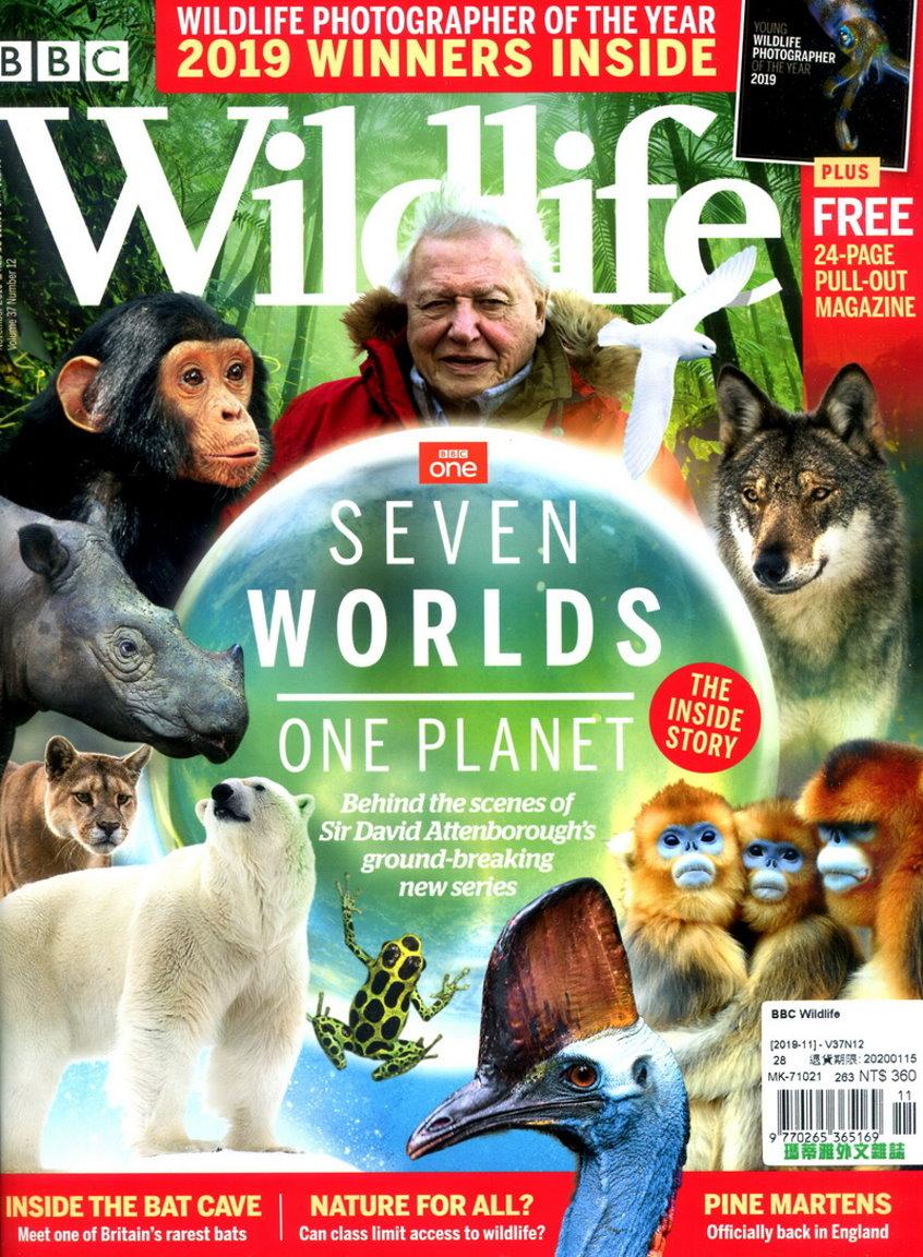 BBC Wildlife 11月號/2019