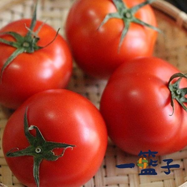 預購《一籃子》新社牛番茄3斤