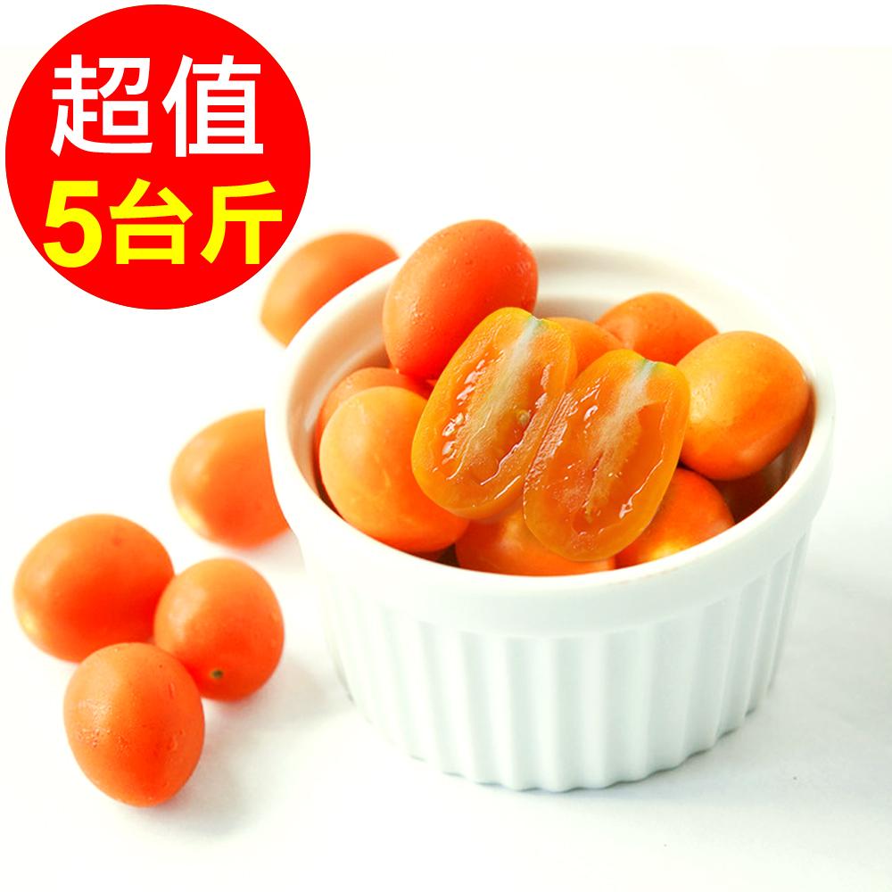 預購-【人字山】美濃橙蜜香小番茄 1箱(5台斤/3公斤)