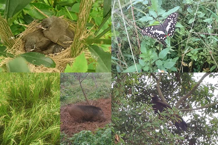 共好米田區周遭的豐富生態